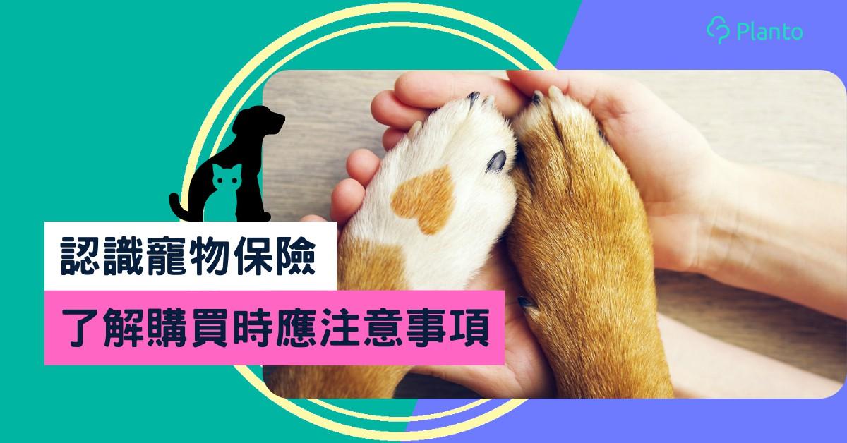 寵物保險比較|認識基本概念及保障類別:醫療/第三者責任/遺失賠償
